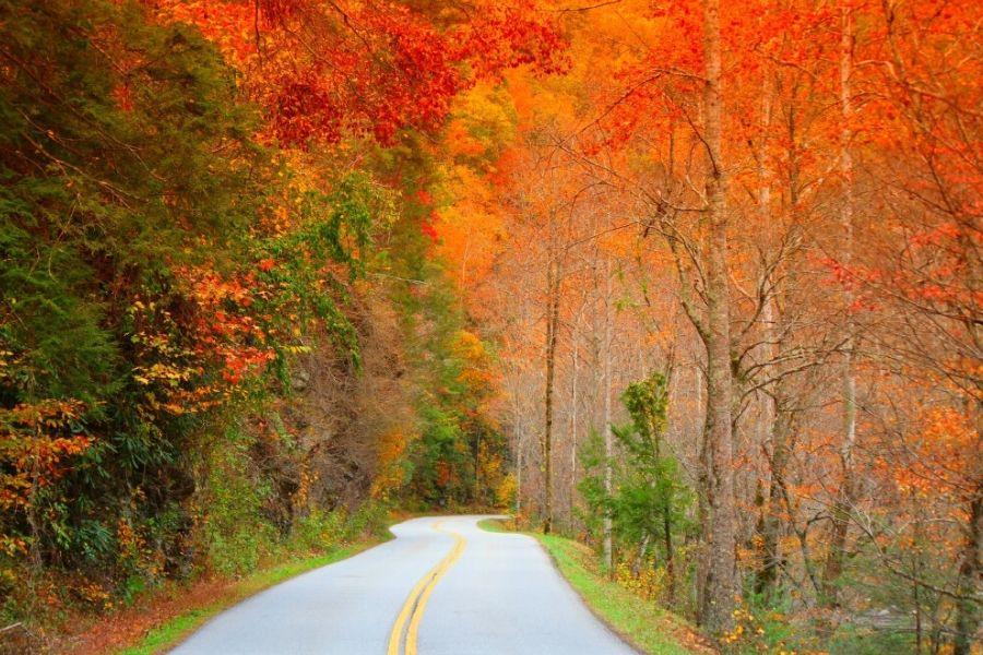 Little River Road Fall Drive