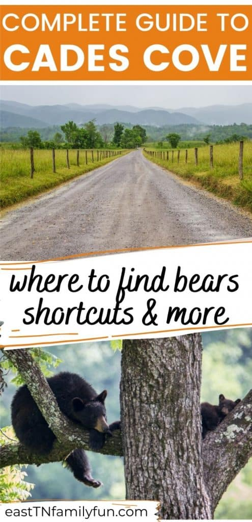 Cades Cove Travel Guide, scenic mountain road above black bears lounging in trees