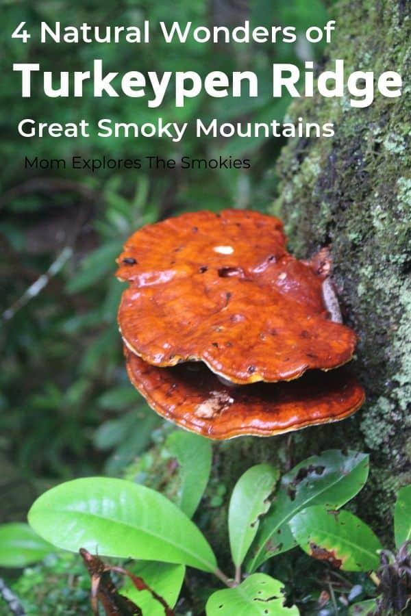 Turkeypen Ridge Hiking Trail Great Smoky Mountains National Park