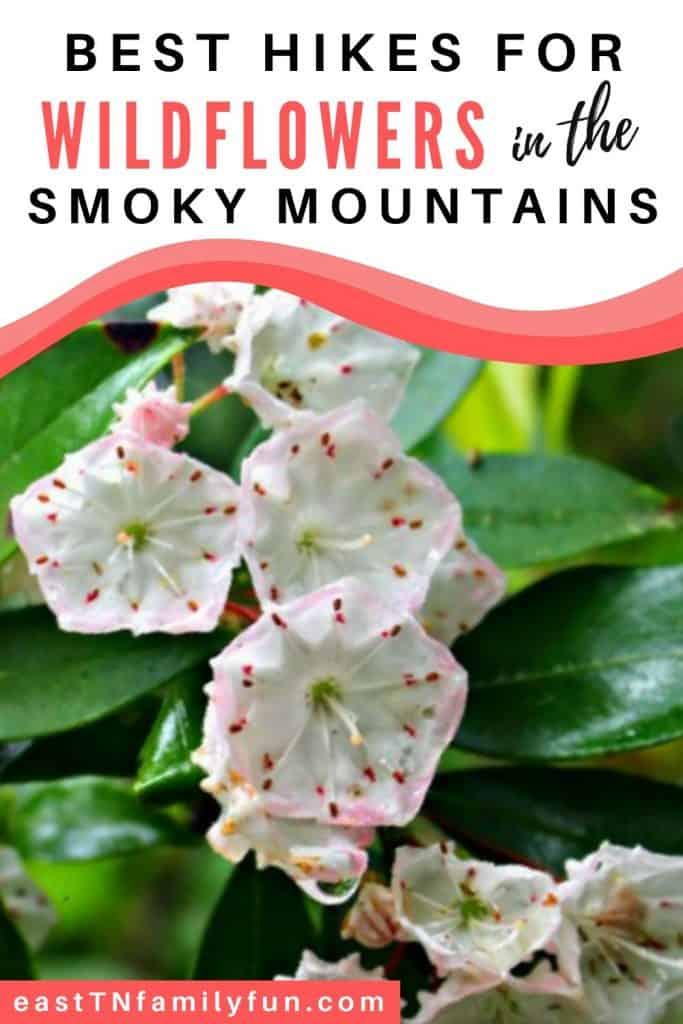 Smoky Mountain Wild Flower Hikes