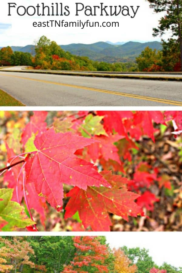 Foothills Parkway in the Fall