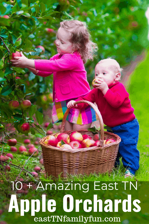 Apple Orchards in East Tennessee