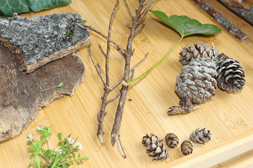 Step by Step Guide to Setting up a Nature Table with Free Nature Sorting Printables, Mom Explores The Smokies