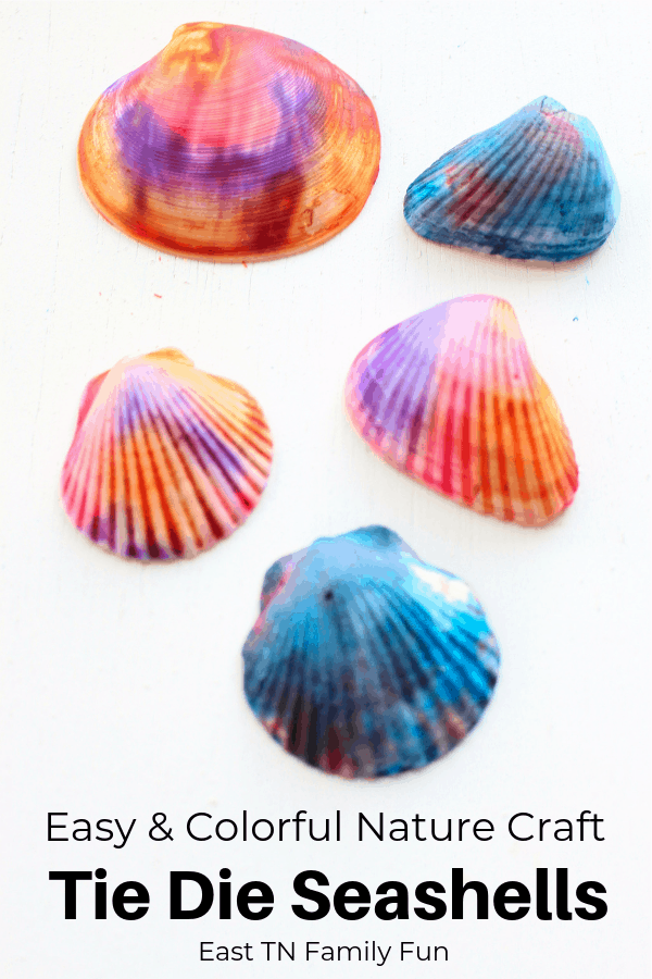 This gorgeous tie dye seashell craft is the perfect way to use up all your beach shells. Mom Explores The Smokies