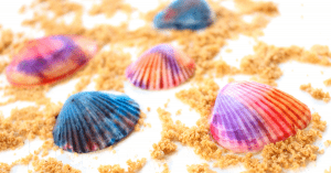 This easy and stunning seashell craft is perfect for kids and adults. Shell crafts are gorgeous. Mom Explores The Smokies
