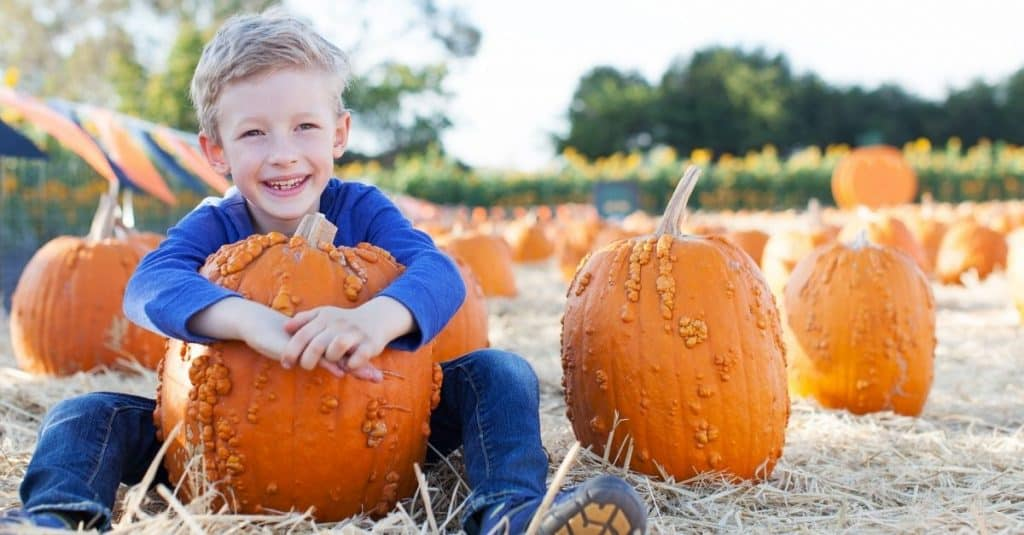Chattanooga Pumpkin Farms