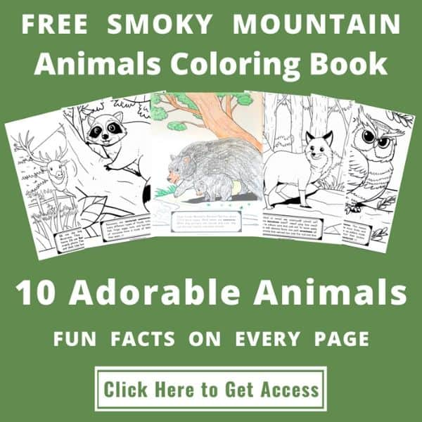FREE Smoky Mountain Coloring Book