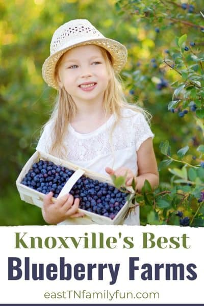 Blueberry Picking Knoxville TN