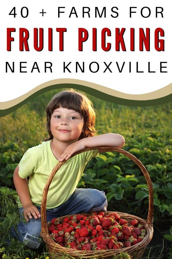 fruit picking near Knoxville