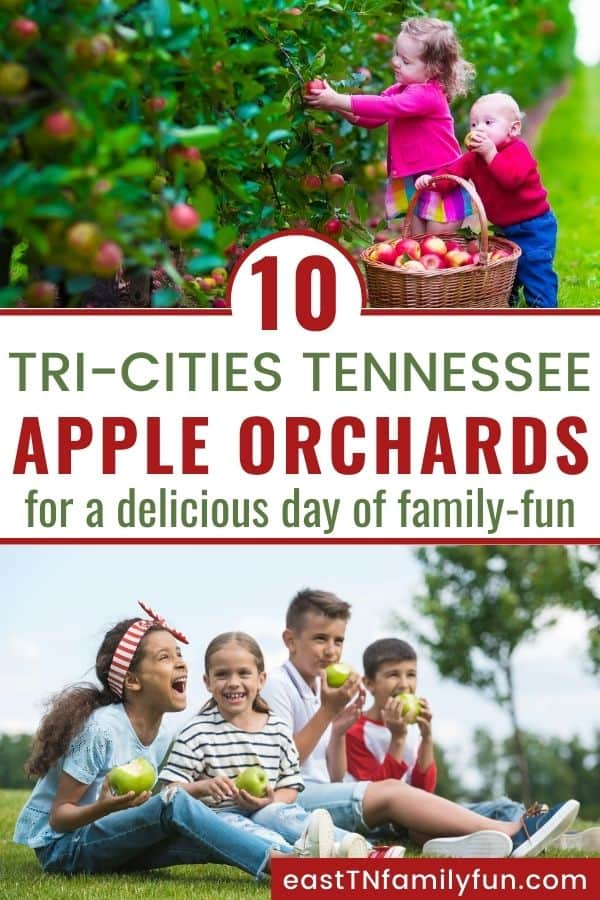 Apple Picking Near Johnson City Tri-Cities TN