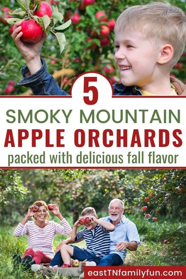 Apple Picking Near Gatlinburg and Pigeon Forge