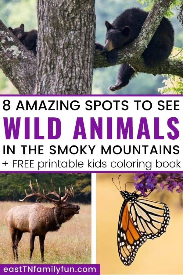 Best Spots to View Smoky Mountain Animals