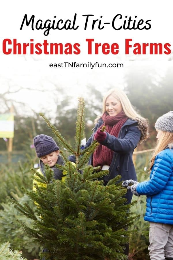 Christmas Trees Farms Near Johnson City TN