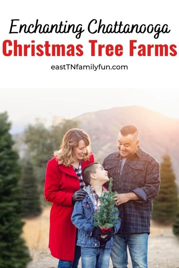 Christmas Tree Farms Chattanooga TN