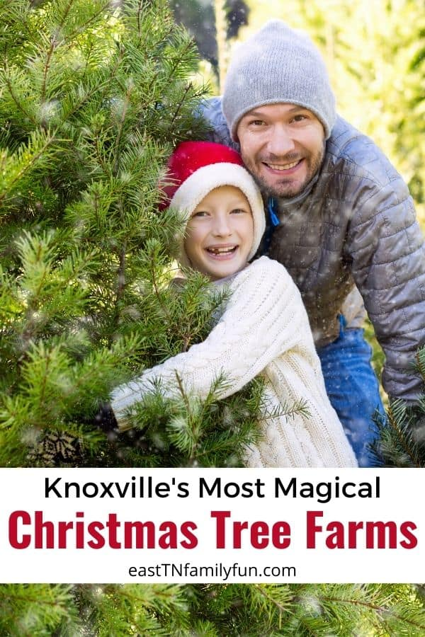 Christmas Tree Farms Knoxville TN