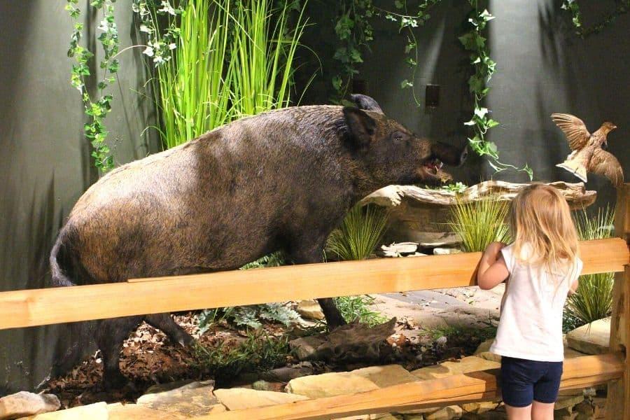 Betty Dunn Nature Center
