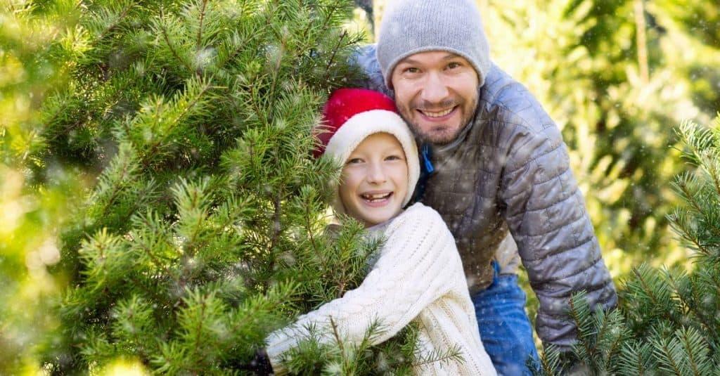 Chattanooga Christmas Tree Farms